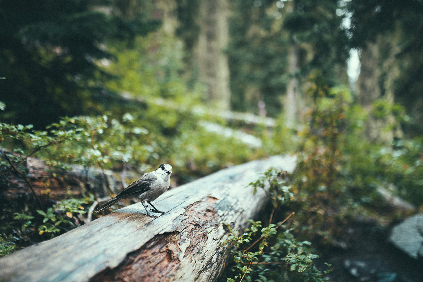 Trail, Joffre Lakes Provincial Park, Kanada