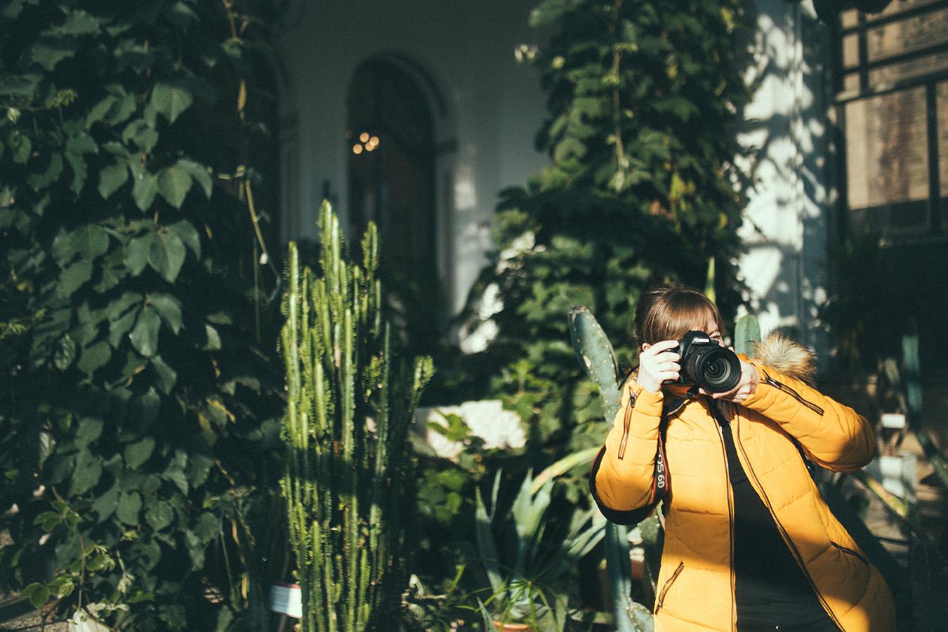 Zamek Moszna, palmiarnia