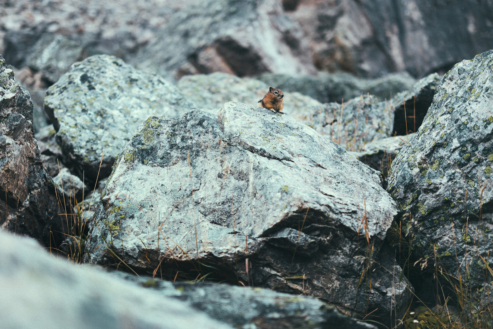 Wildlife, Kanada