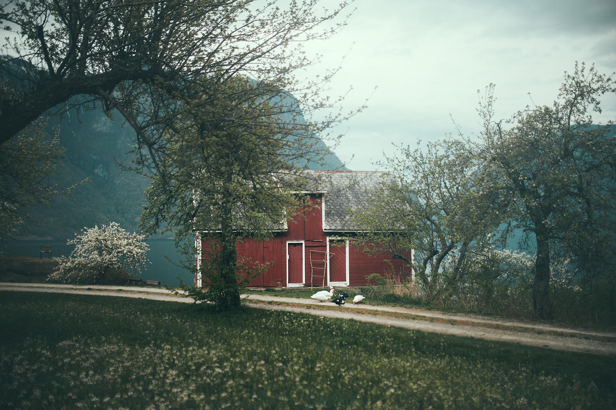 Aurland, farmy