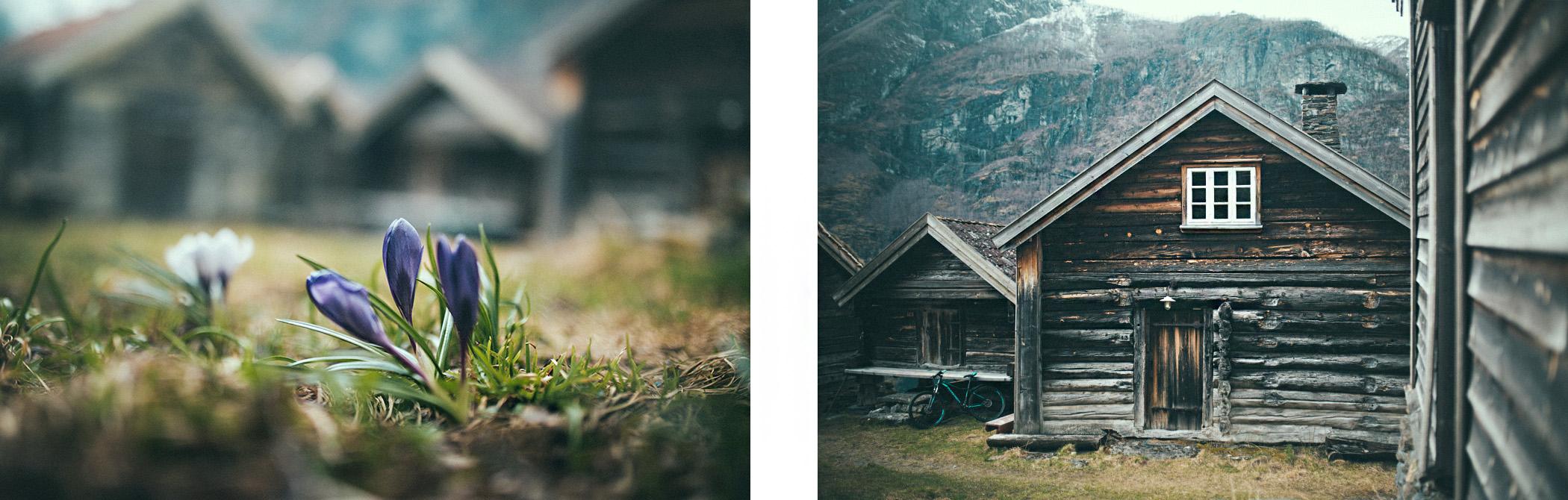 Otternes, krokusy, Norwegia