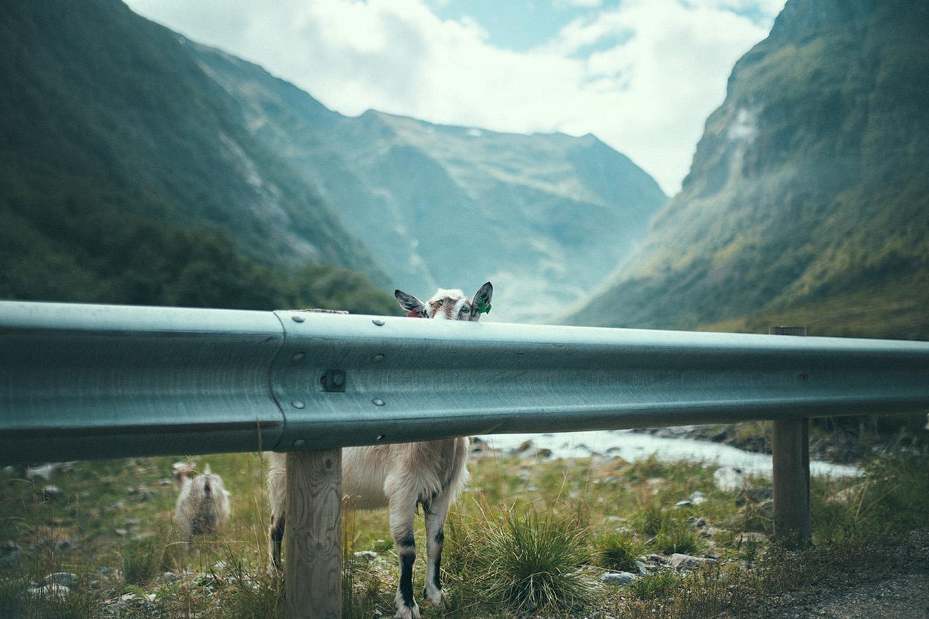 kozy w Undredal, Norwegia